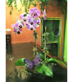 BUTTERFLY & ORCHID