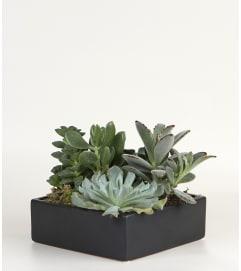 Succulent Ceramic