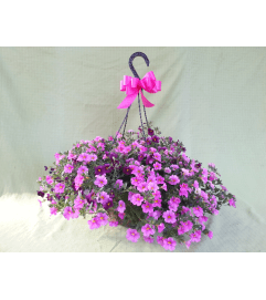 Sunny Flowering Hanging Basket of Fun!