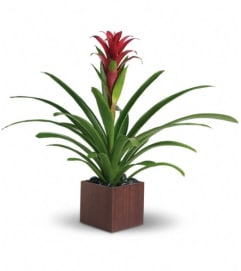 Teleflora's Bromeliad Beauty