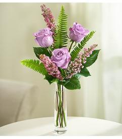 loves embrace roses purple