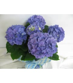 Custom Designed Flowers & Gifts - Kitchener, ON Florist