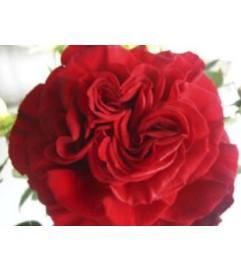 1 Dozen Red Heart Garden Roses Vase Arranged