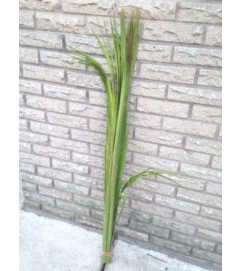 Palm Crown Bud for Palm Sunday