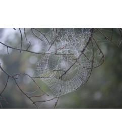 Elegant Dewy Web-  Morning Lovers Arrangement