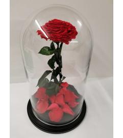ENCHANTED ROSE RED