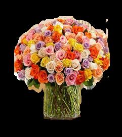 100  Long Stem Assorted  Roses