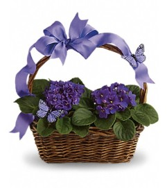 Teleflora's Violets and Butterflies