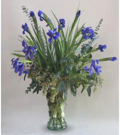 Iris's In Bloom