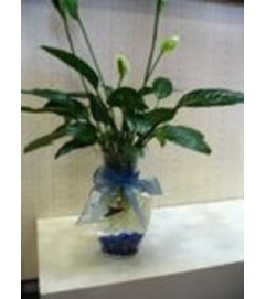 Plish War & Peace Bouquet