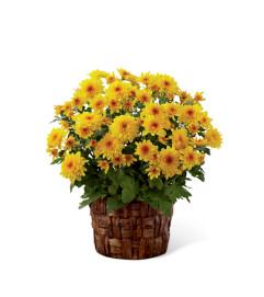 The FTD® Chrysanthemum