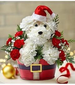 Santa Paws™