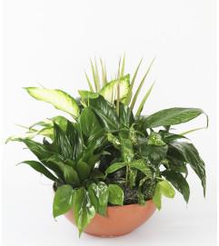 Lush Green Planter by DiBiaso's