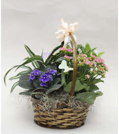 Butterfly Basket of Blooms