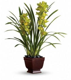 Teleflora's Splendid Orchids