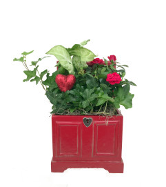 Locket Chest Dishgarden