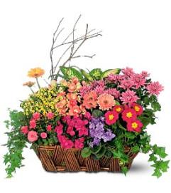 Bursting with Beauty Garden Basket