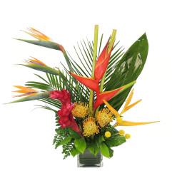 Tropical Sensation
