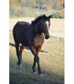 Horse Lovers Choice