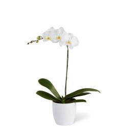 The FTD® White Orchid Ceramic Planter