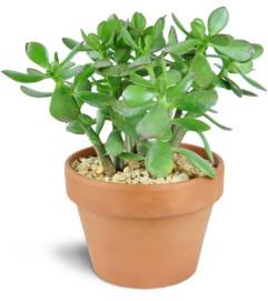 Simply Succulent