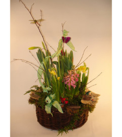 Large Assorted Spring Bulb Basket