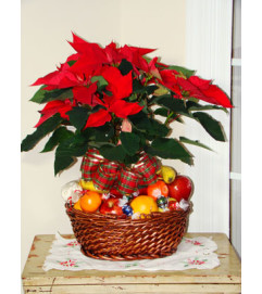 Fruit & Planter Christmas Basket