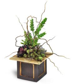 Modern Succulent Dish Garden