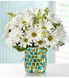 Daisy Garden™