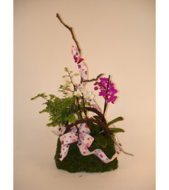 Mini Orchids in a Purse (Medium)