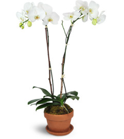 Magnificent Orchids™