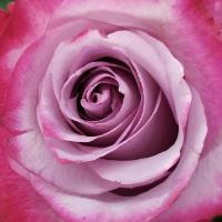 Paul Buettner Florist Inc. - Real Local Florist