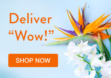Tropical birds of paradise and white orchids on a blue background - flower delivery in Bullhead City