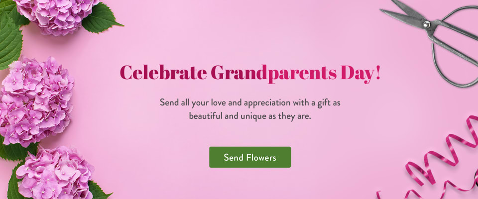 Pink hydrangea to celebrate grandparents day - flower delivery in Hayward