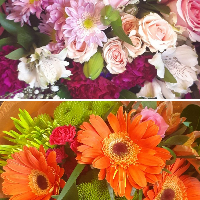 Grower Direct Acadia - Real Local Florist