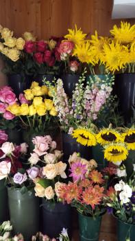 FBR-12524-flowers_mqslux_tgepit.jpg