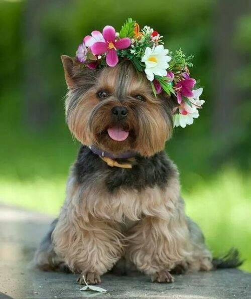 FBZ-97124-puppy_flowers_kuztut_t0zrei.jpg