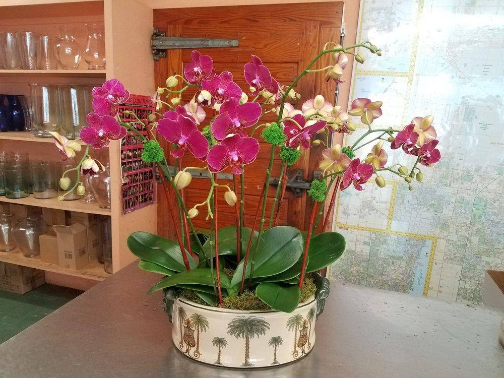 Orchid_2_h2tvus.jpg