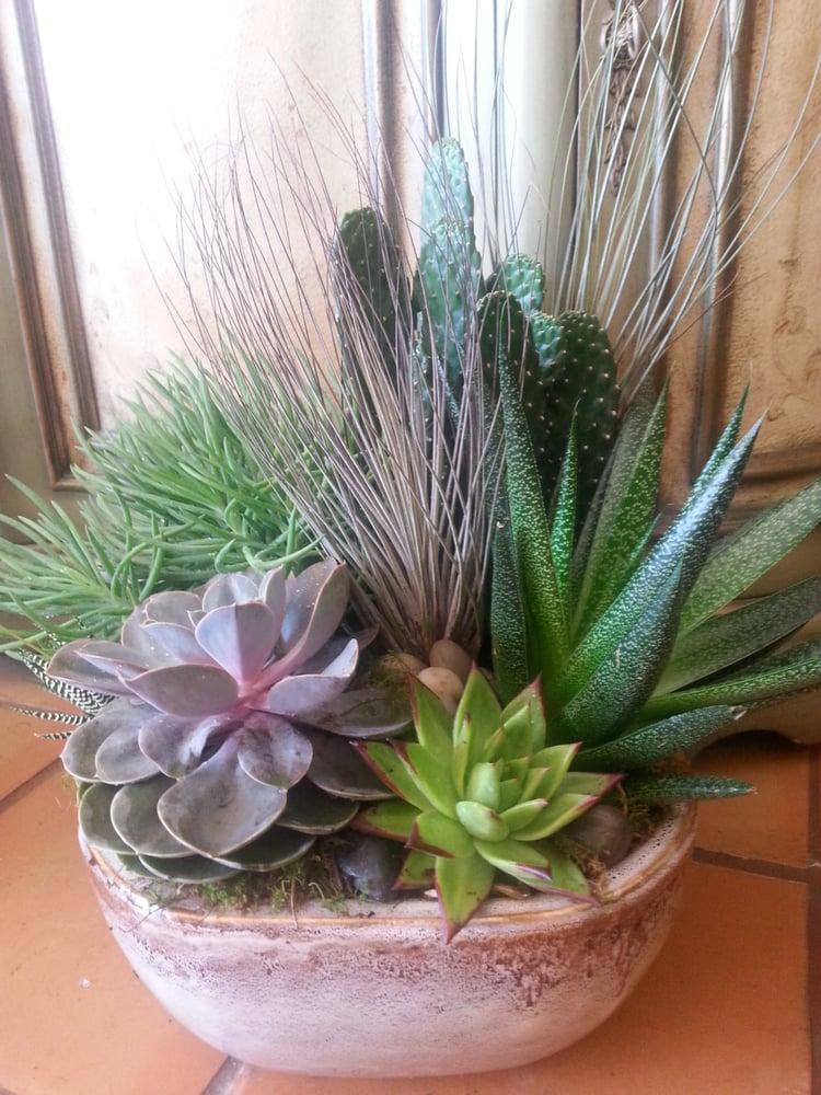 Succulant_Garden_qtelms.jpg
