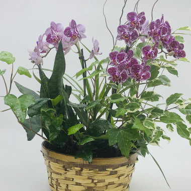 Dish_Garden_Planter_with_Orchid_i6il02.jpg