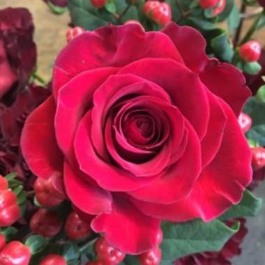 FBR-12524-rose_omykqk_cknwyr.jpg