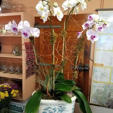 Orchid_1_sxlfw1.jpg