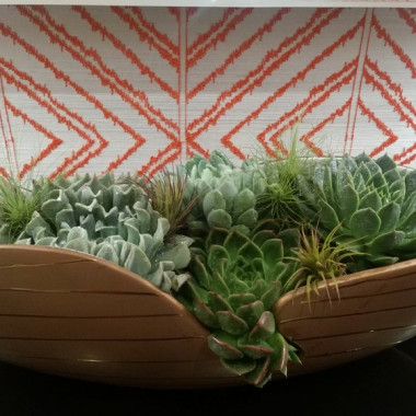 Plants_Succulents_2_paasbu.jpg