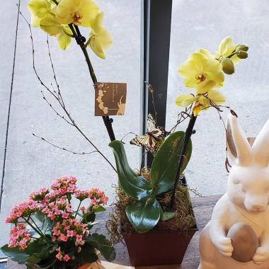orchids_jpduqh.jpg