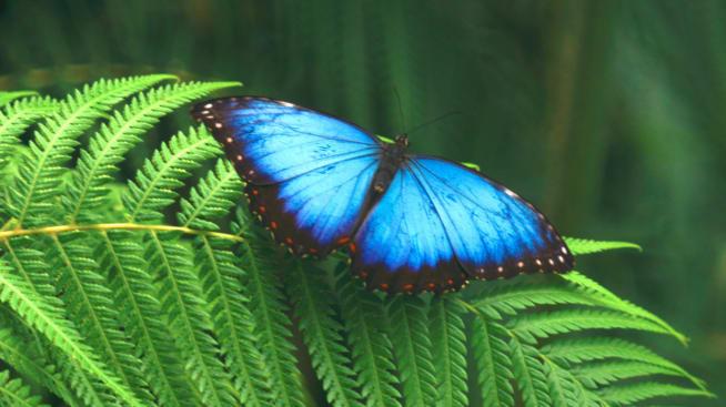 insects invertebrates animals eden channel