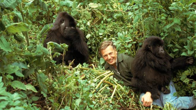 More Sir David Attenborough Quotes