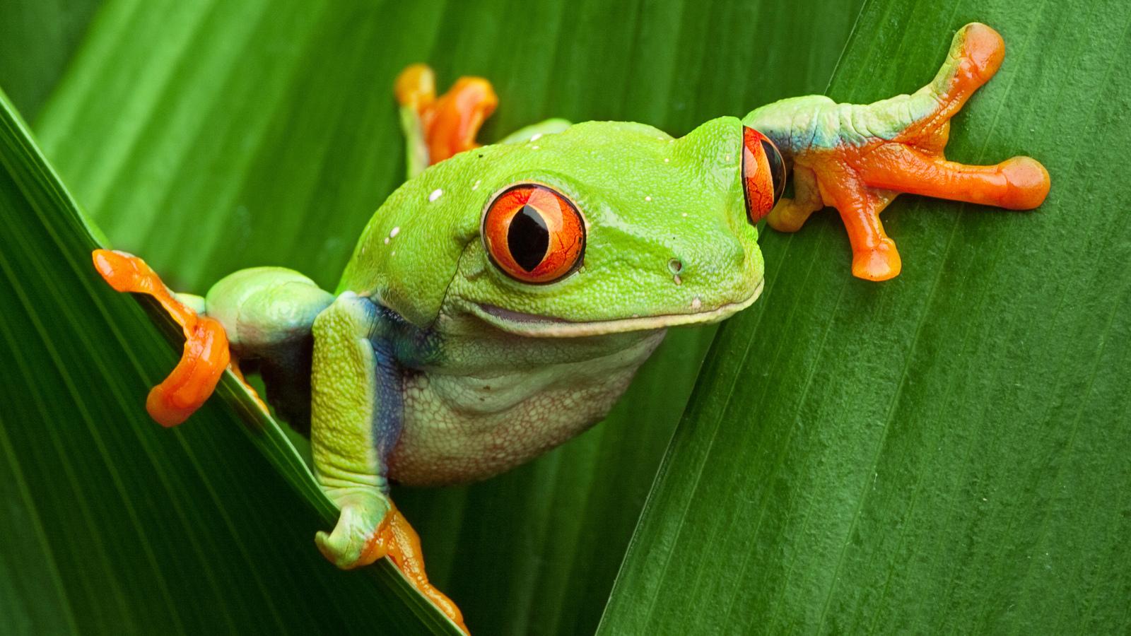 Amphibians | Animals | Eden Channel
