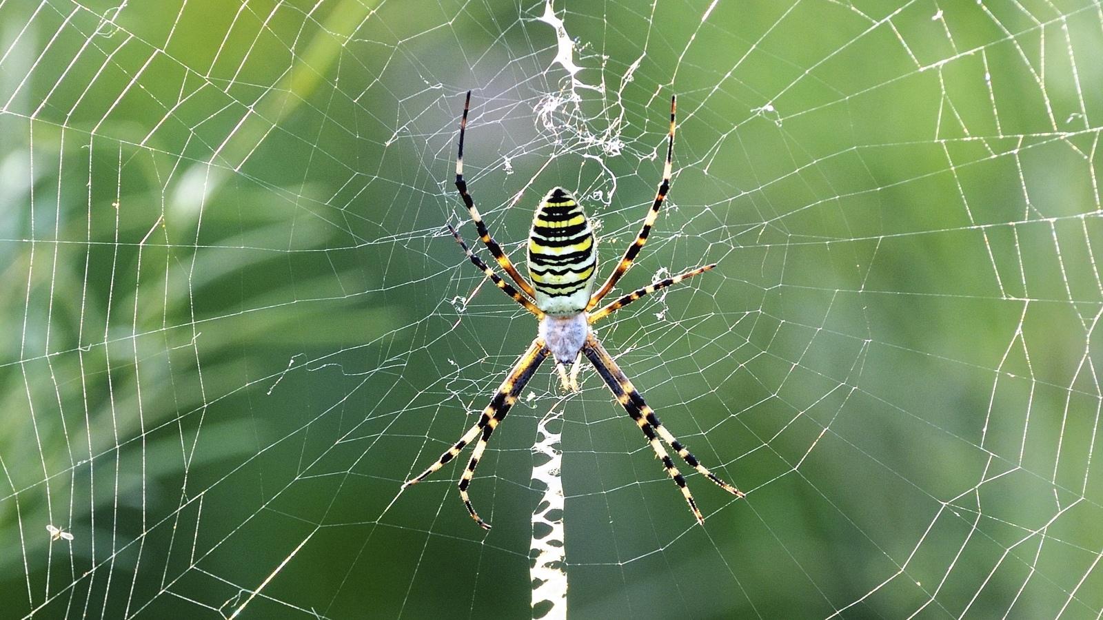 spider invertebrates animals eden channel