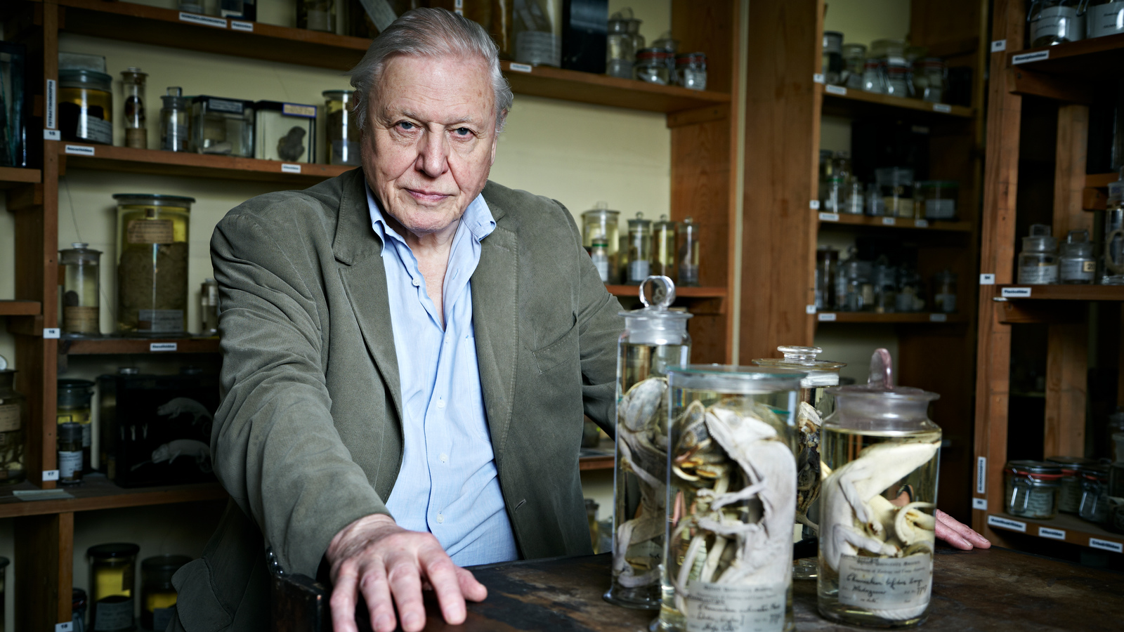 David Attenborough 39 S Natural Curiosities Eden Channel