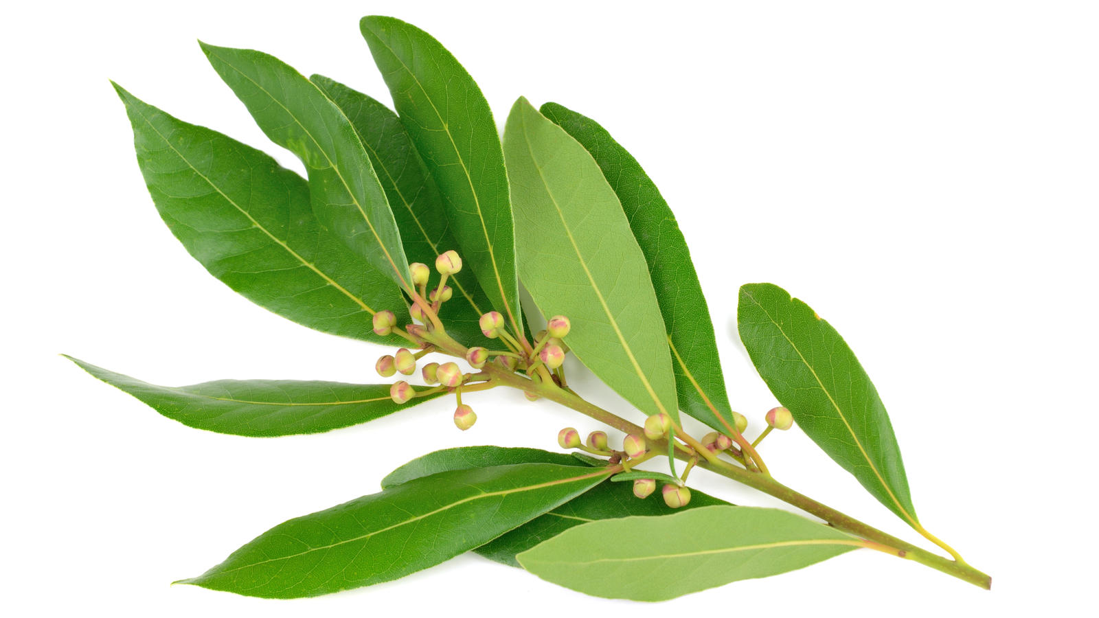 Bay leaves ingredients discover good food channel - Cook bay leaves ...